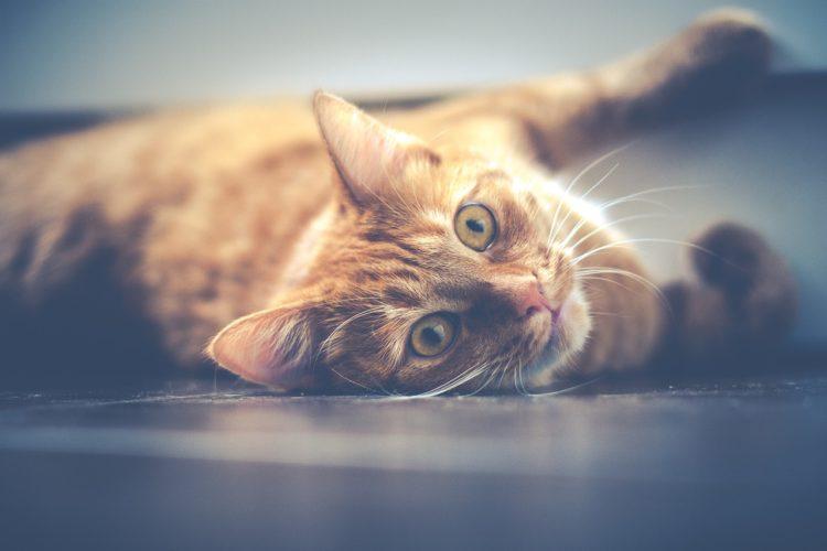 世界遺産のために猫を殺す?