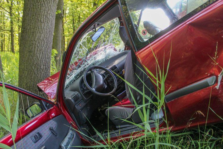 アマミノクロウサギの死因の原因は100%交通事故