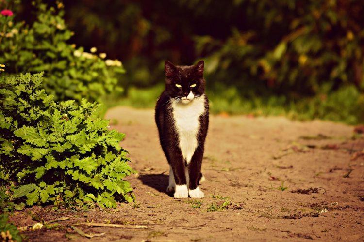 猫は山で暮らす方が良いの?