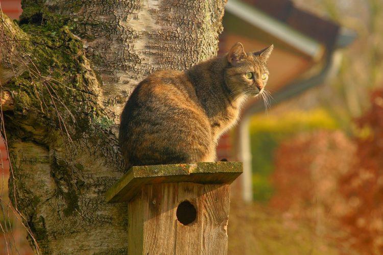 奄美を猫の島にして観光客を増やせばいい