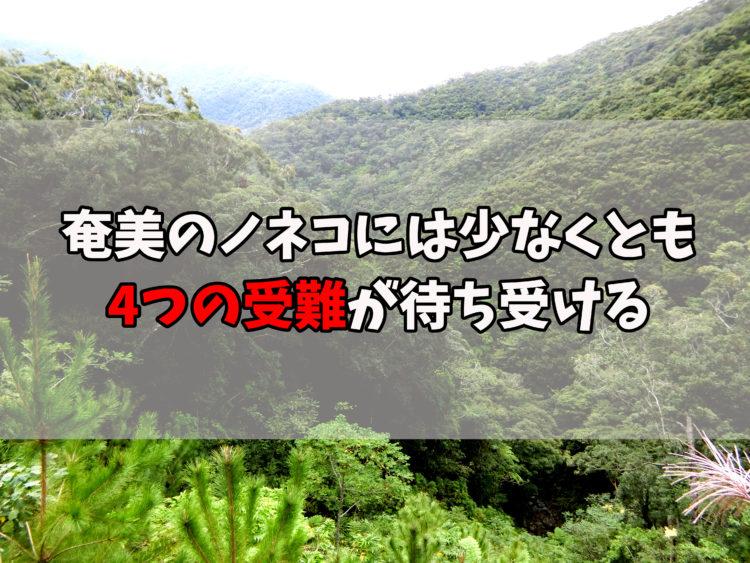 奄美のノネコ、4つの受難
