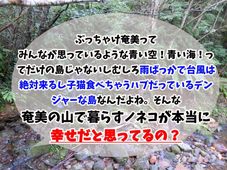 奄美のノネコは幸せなの?