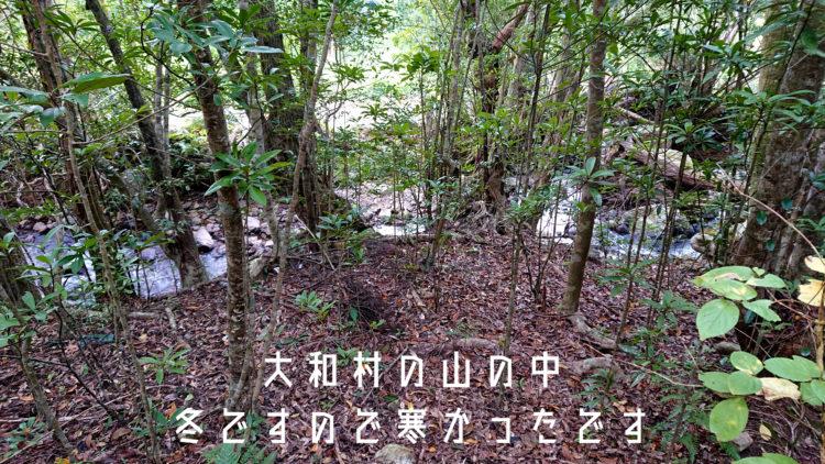 奄美 大和村の山